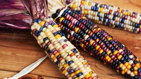 Blood and Corn: Mayan Civilization