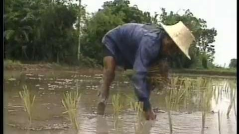 A Genetic Odyssey in Rice