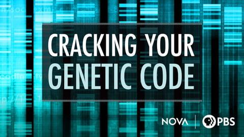 Preview image of NOVA