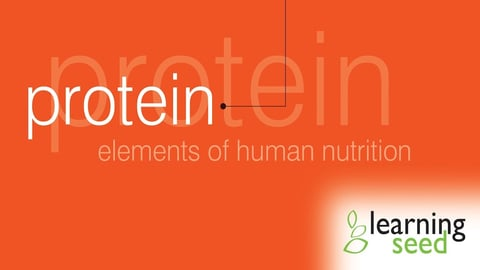 Elements Of Human Nutrition