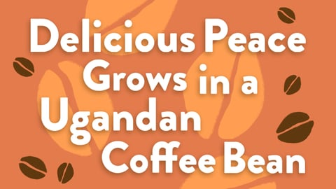 Preview image of Delicious Peace Grows in a Ugandan Coffee Bean