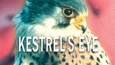 Preview image of Kestrel's Eye