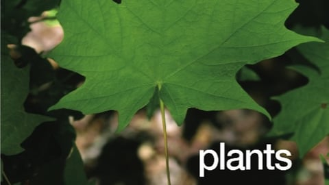 Preview image of Plants Around Us Series, for Primary