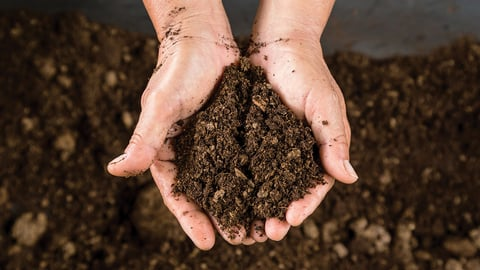 Soil Preparation and Protection
