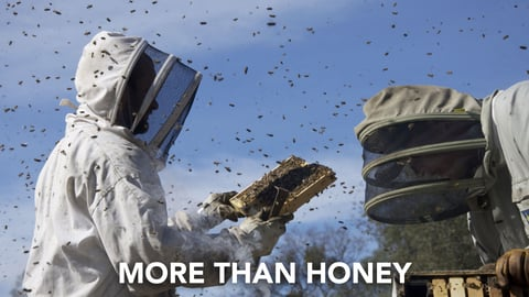 Preview image of More than honey