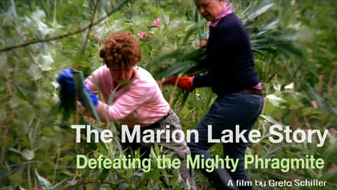 The Marion Lake Story - Defeating The Mighty Phragmite