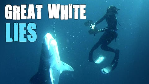 Preview image of Great White Lies