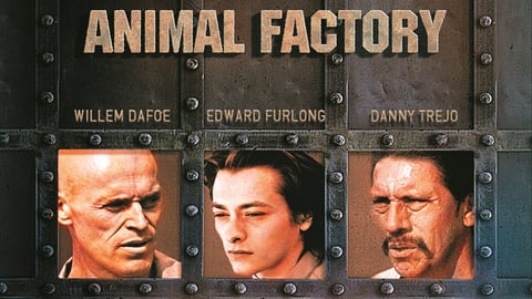 Animal Factory cover image