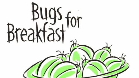 Preview image of Bugs For Breakfast: Food and Culture