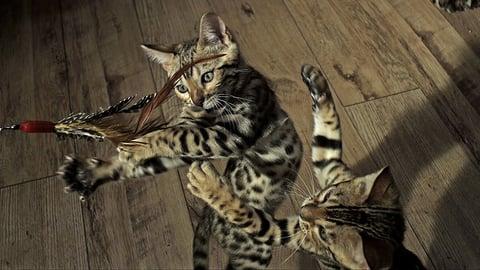 Nature - Pets: Wild at Heart - Playful Creatures