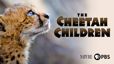 The Cheetah Children