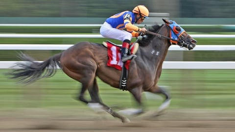 Preview image of Horse Races and Stock Markets