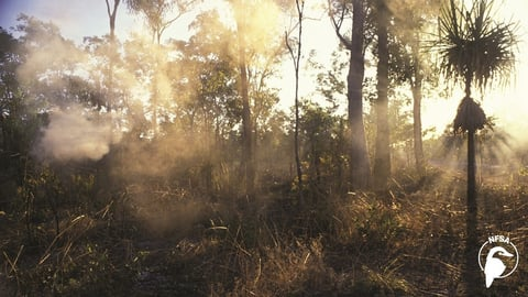 Preview image of Kakadu Man