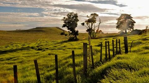 "Native Planet Program 1: New Zealand - Restoring the ""Mauri"""