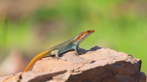 Africa's Reptiles And Amphibians