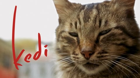 Kedi - The Cats of an Ancient City