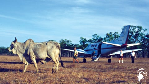 The Real Flying Doctors