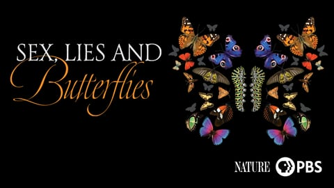 Sex, Lies and Butterflies cover image