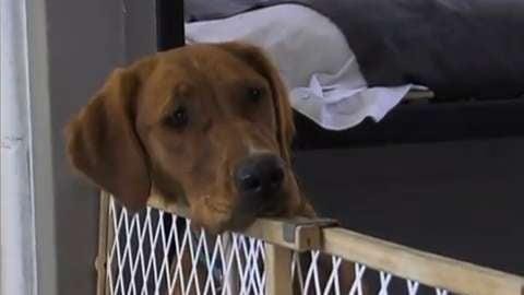 Prison Pups