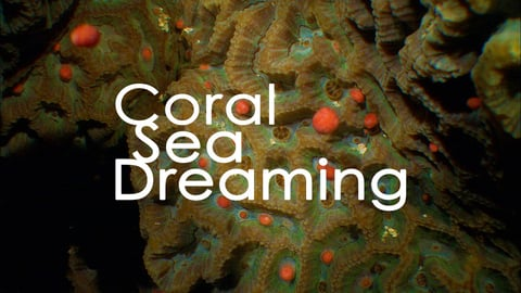 Preview image of Coral Sea Dreaming