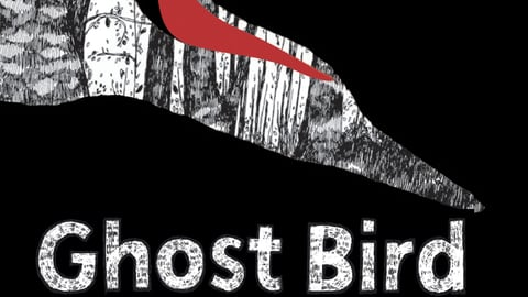 Ghost Bird cover image