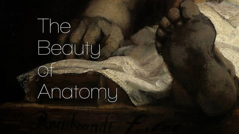 Preview image of Beauty of Anatomy