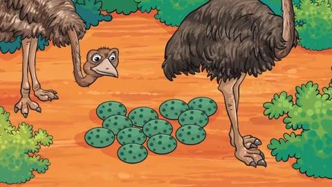 Boiled Emu Eggs