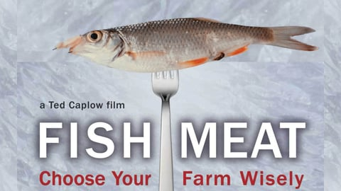 Preview image of Fishmeat: Choose Your Farm Wisely