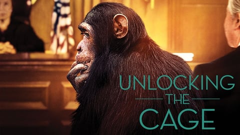 Preview image of Unlocking the Cage