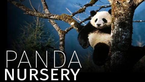Preview image of Panda Nursery