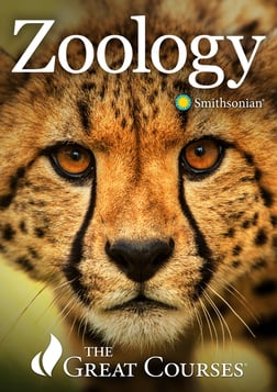 Zoology: Understanding the Animal World