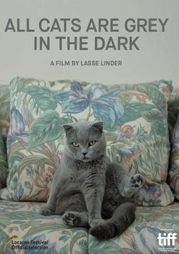 All Cats Are Grey in the Dark - Nachts sind alle Katzen grau