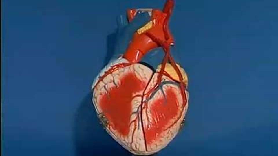 Cardiovascular Care For Assistants (Cardiovascular Series)
