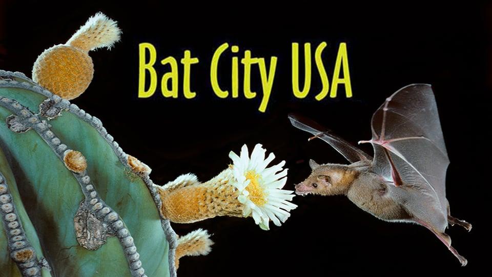 Bat City USA