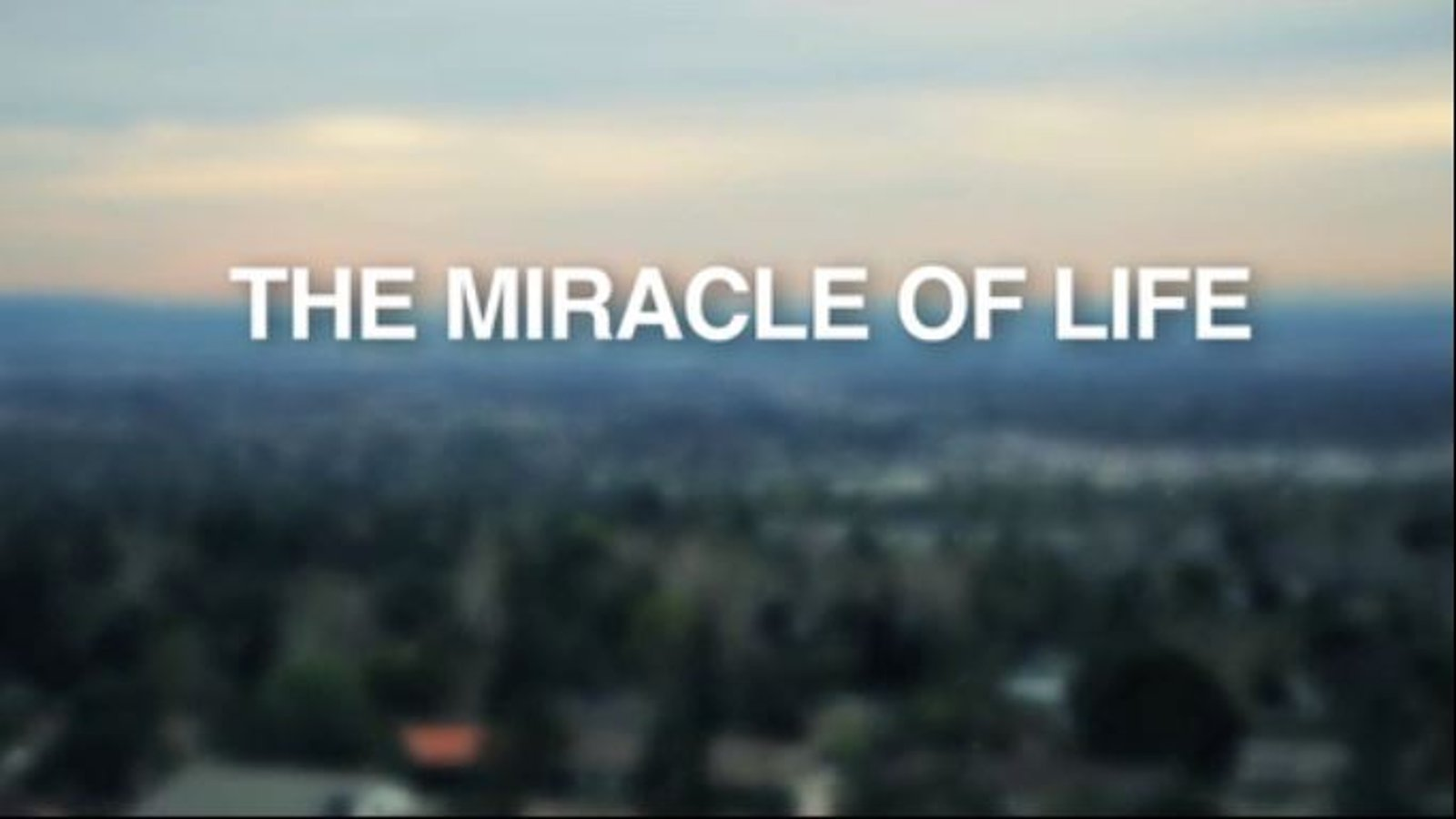 Miracle of Life - To Abort a Child or to Take a Chance on Life?