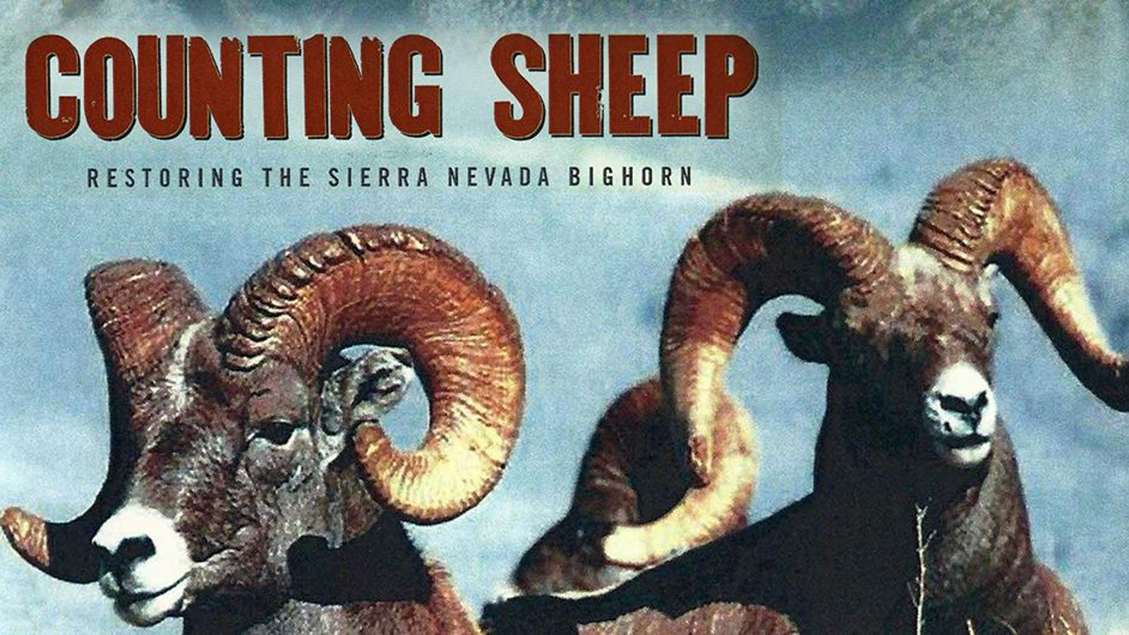 Counting Sheep - Restoring the Sierra Nevada Bighorn