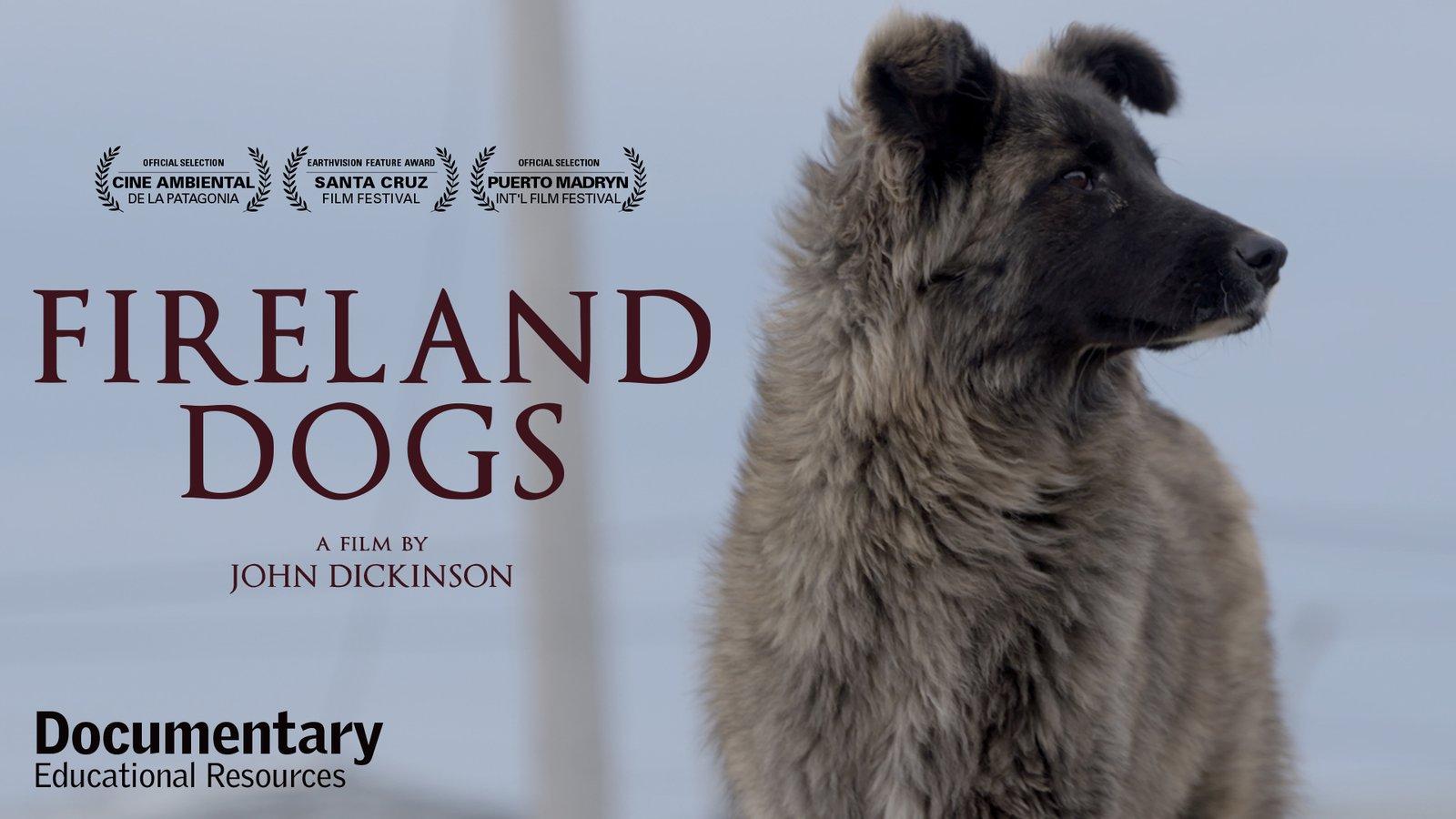 Fireland Dogs