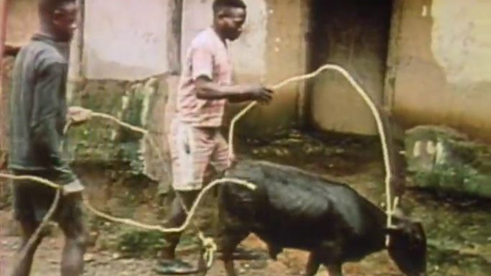 The Cows of Dolo Ken Paye - Resolving Conflict Among the Kpelle