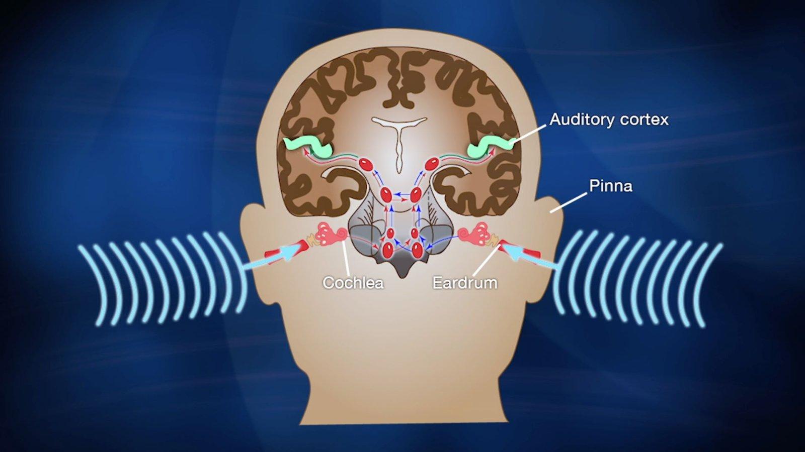 How the Brain Comprehends Language