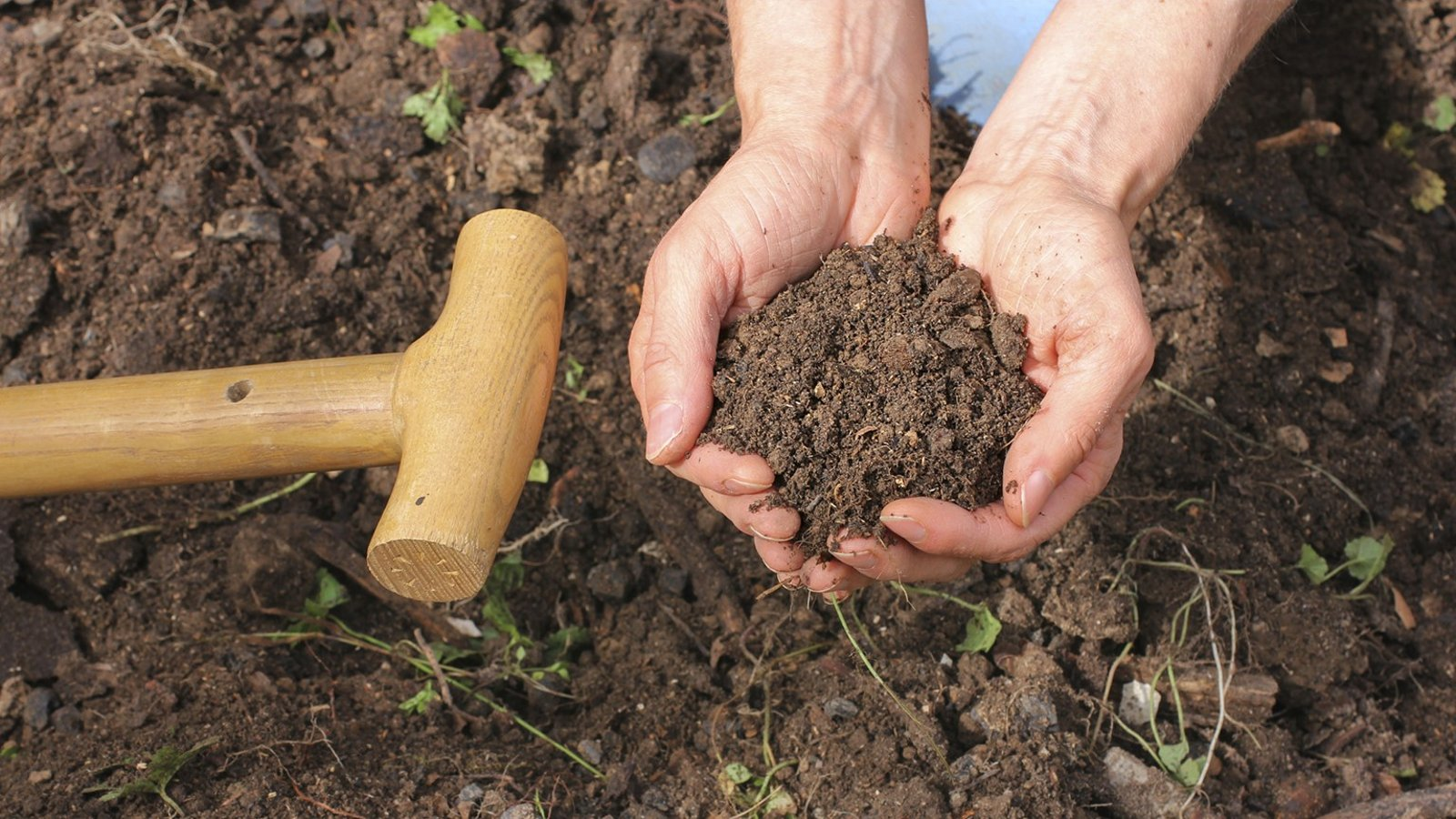 Prepare Healthy Soil and Plant for Spring