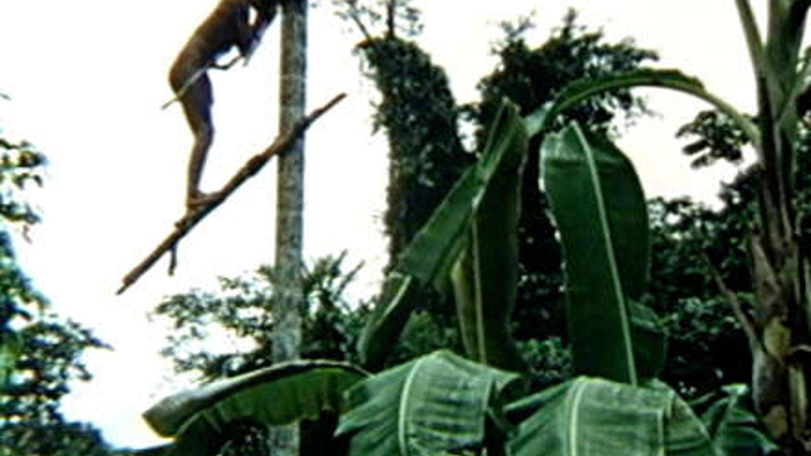 Climbing the Peach Palm