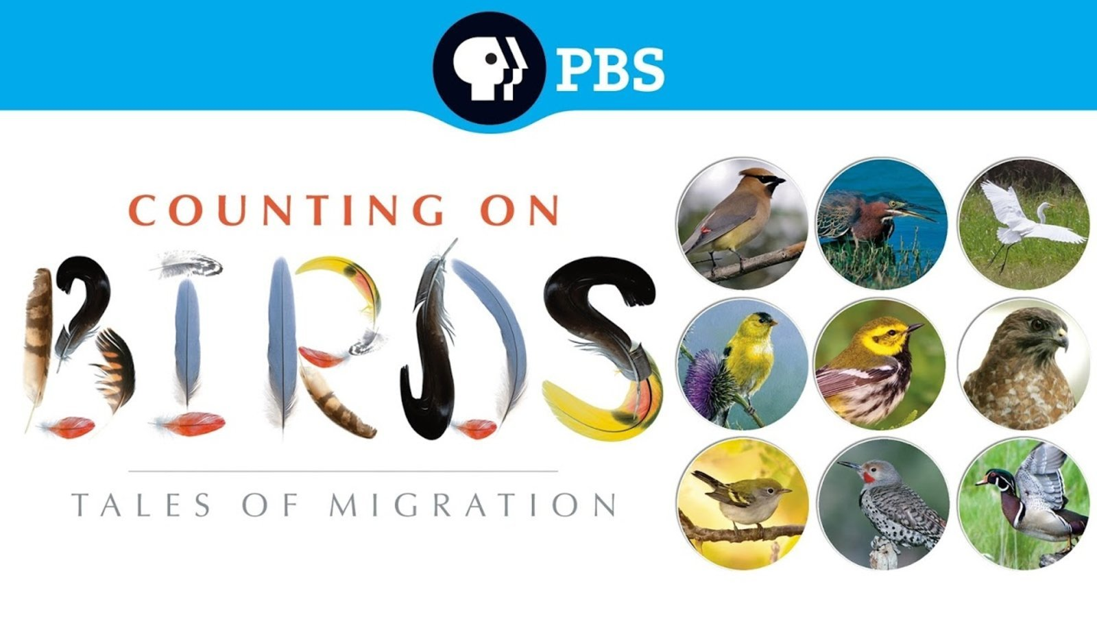 Counting on Birds - Tales of Migration