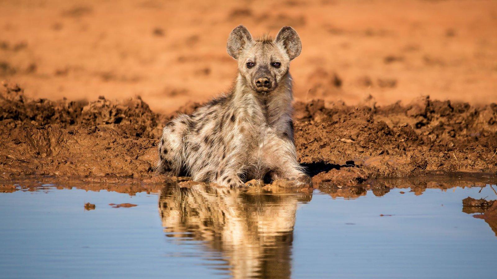 African Predators