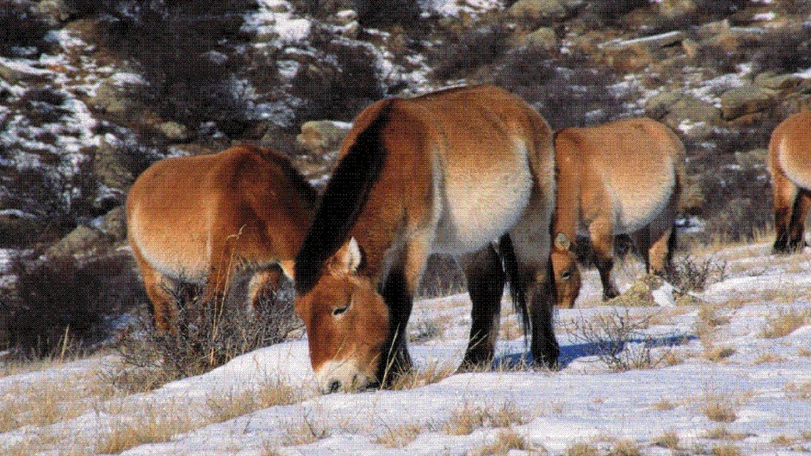 Wild Horses - Return to China