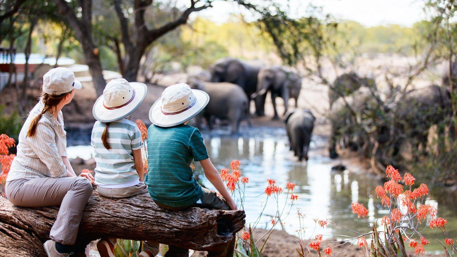 The Evolution Of The Modern Safari