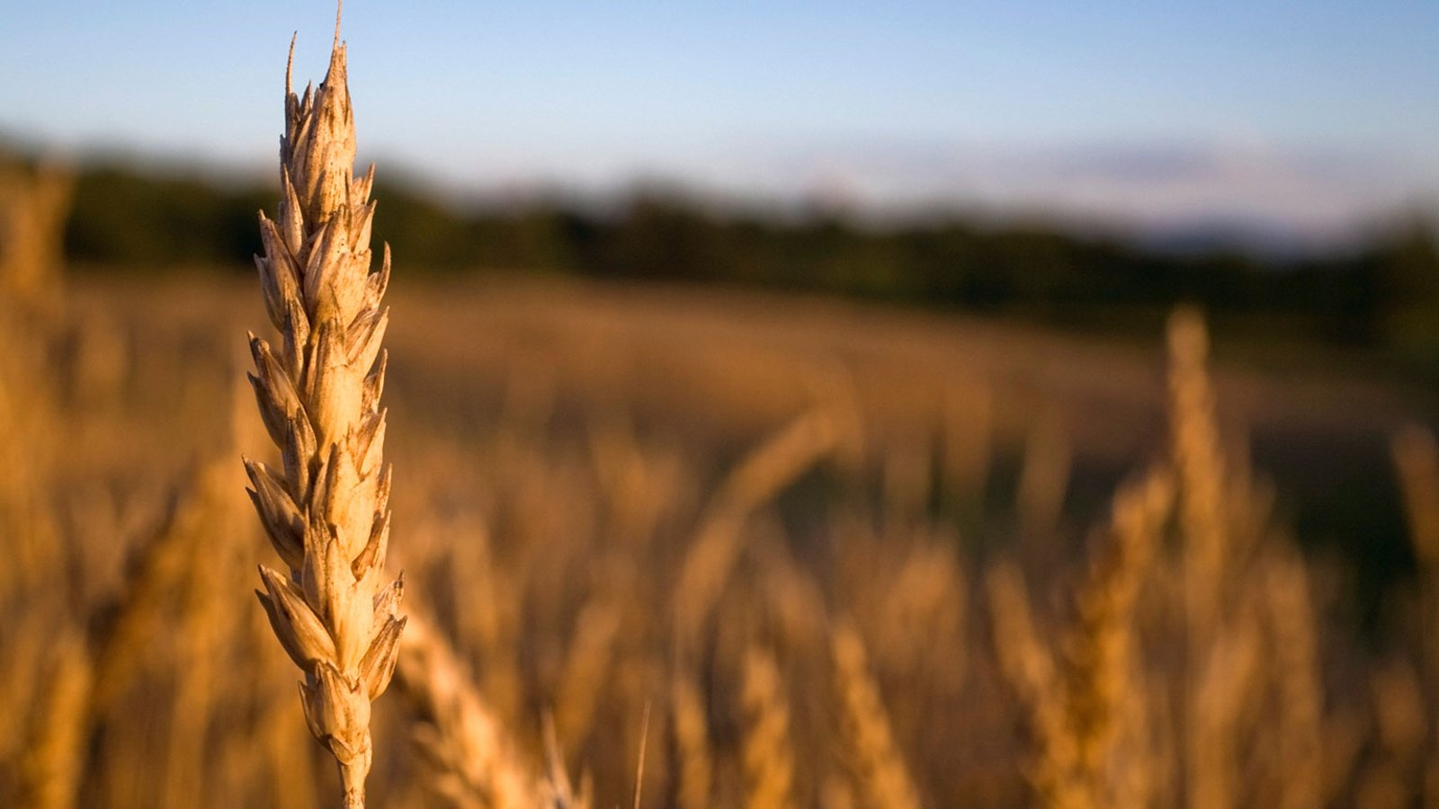 What Early Agriculturalists Ate