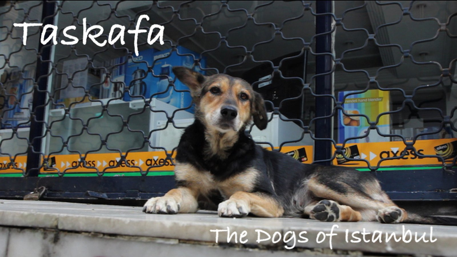 Taskafa, Stories of the Street - The Street Dogs of Istanbul