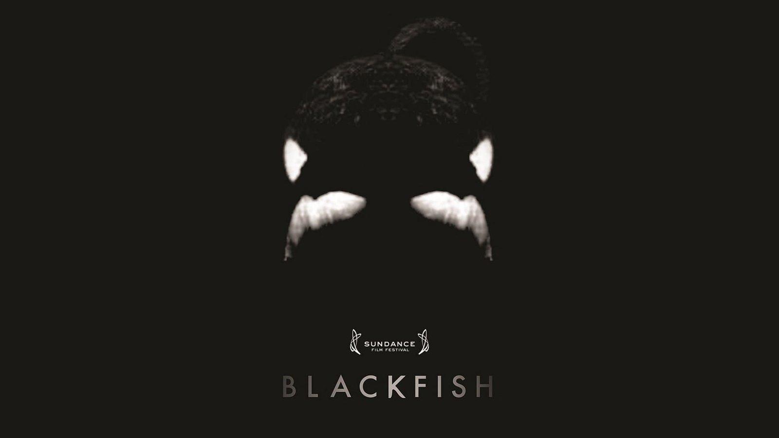 Blackfish - Orcas in Captivity