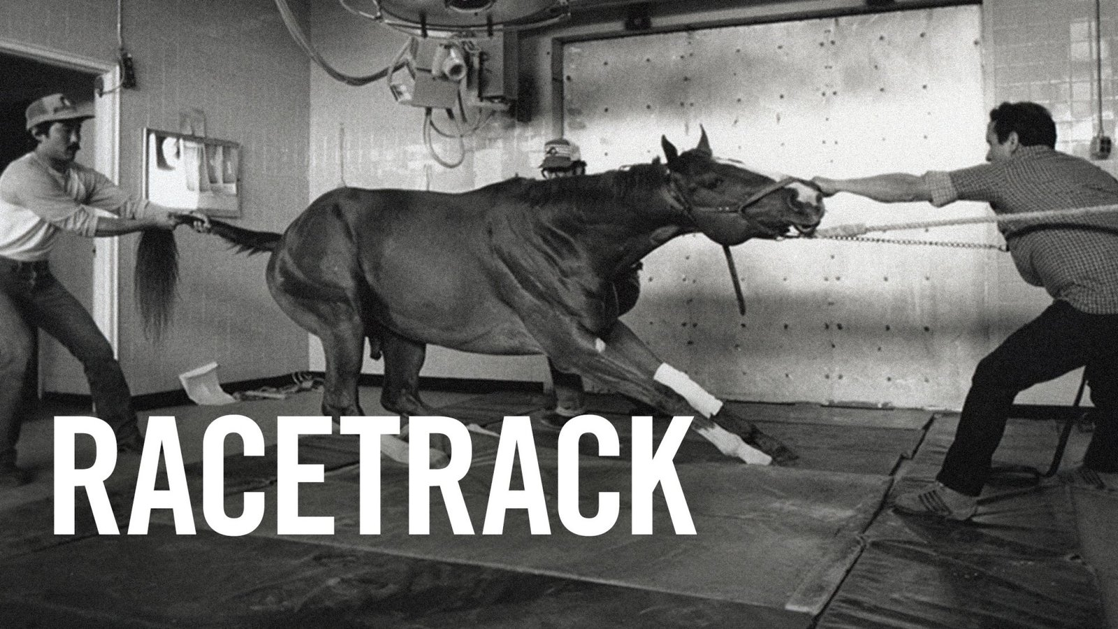 Racetrack - The Daily Activites at the Belmont Race Track