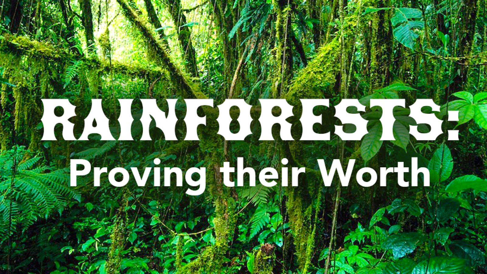 Rainforests: Proving their Worth